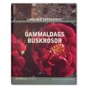 Gammaldags buskrosor